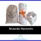 Mussole neonato: cosa sono e a cosa servono, come si usano e dove comprare le migliori